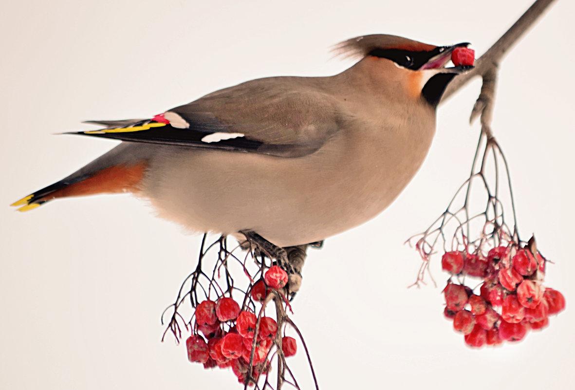 Птицы без названия