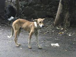 Public domain image - Homeless dog