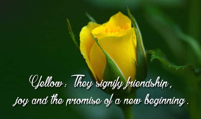 What Color Rose Signifies Friendship