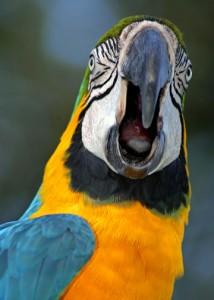 Bird Biting