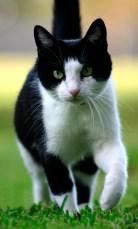 Cat & Kitten Territorial Marking