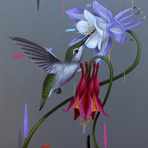 Hummingbird and Columbines