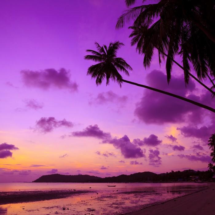 Tableau Sur Toile Plage Tropicale Avec Palmiers Au Coucher