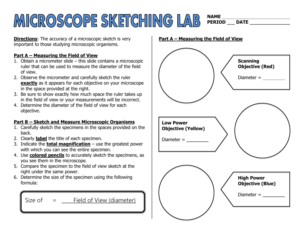 Microscope Sketching Lab
