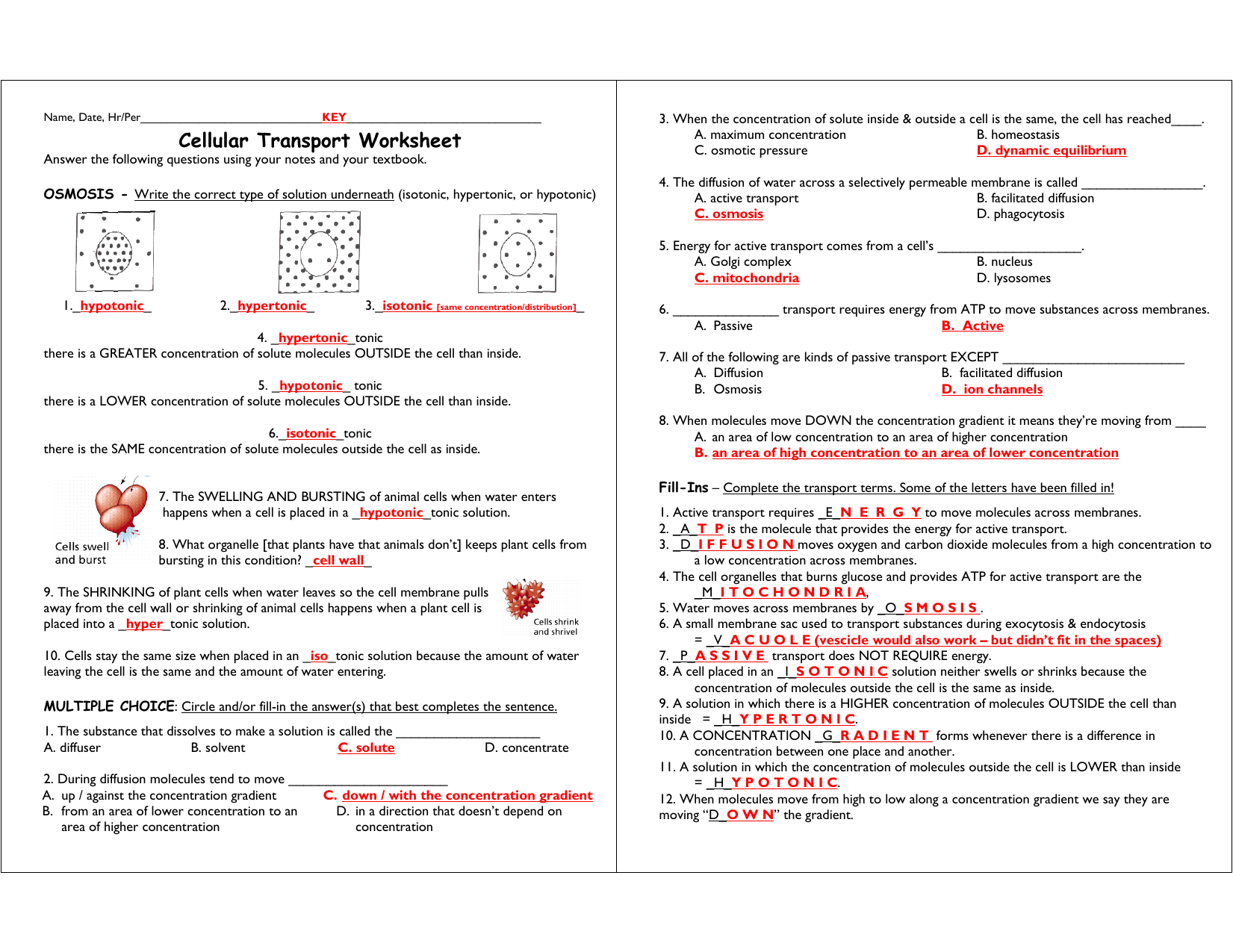 Worksheet Cellular Transport Worksheet Answer Key Grass