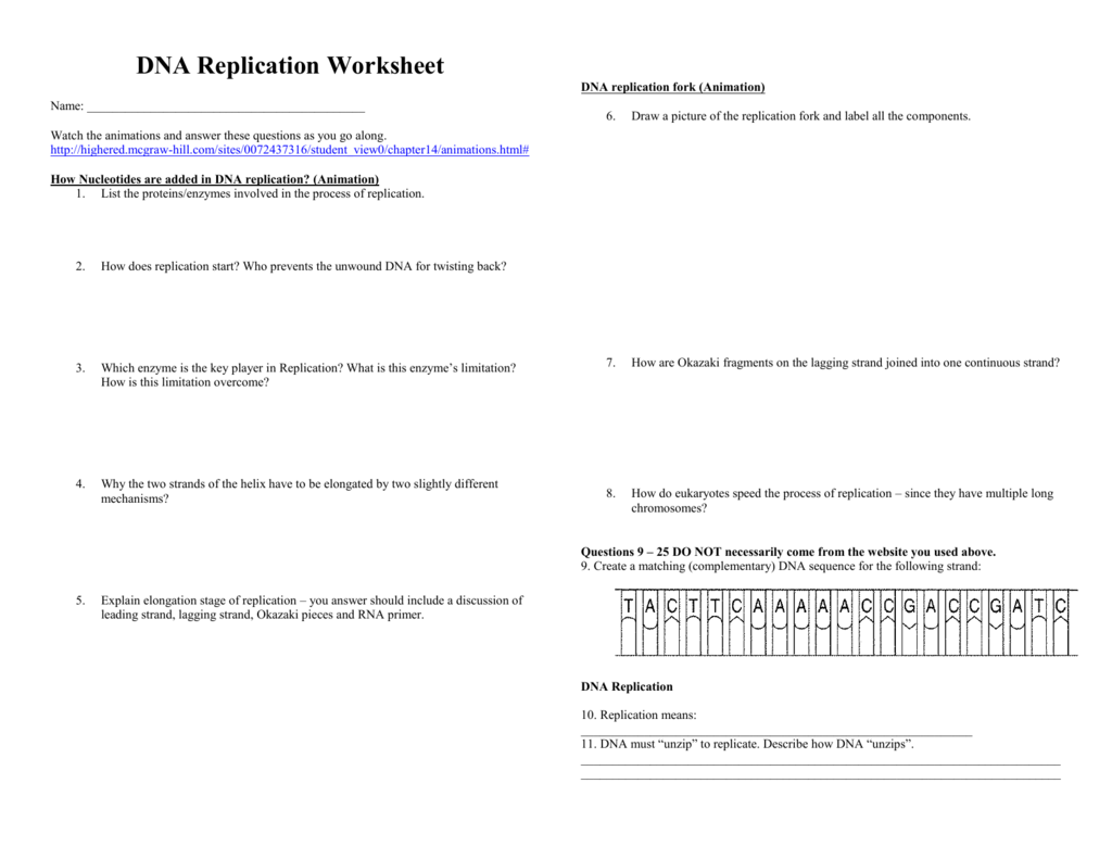 Dna Replication Worksheet Watch The Animations And Answer