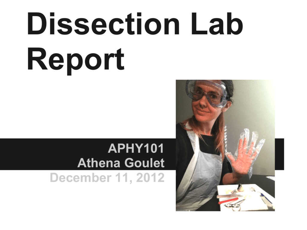Report Dissection Lab