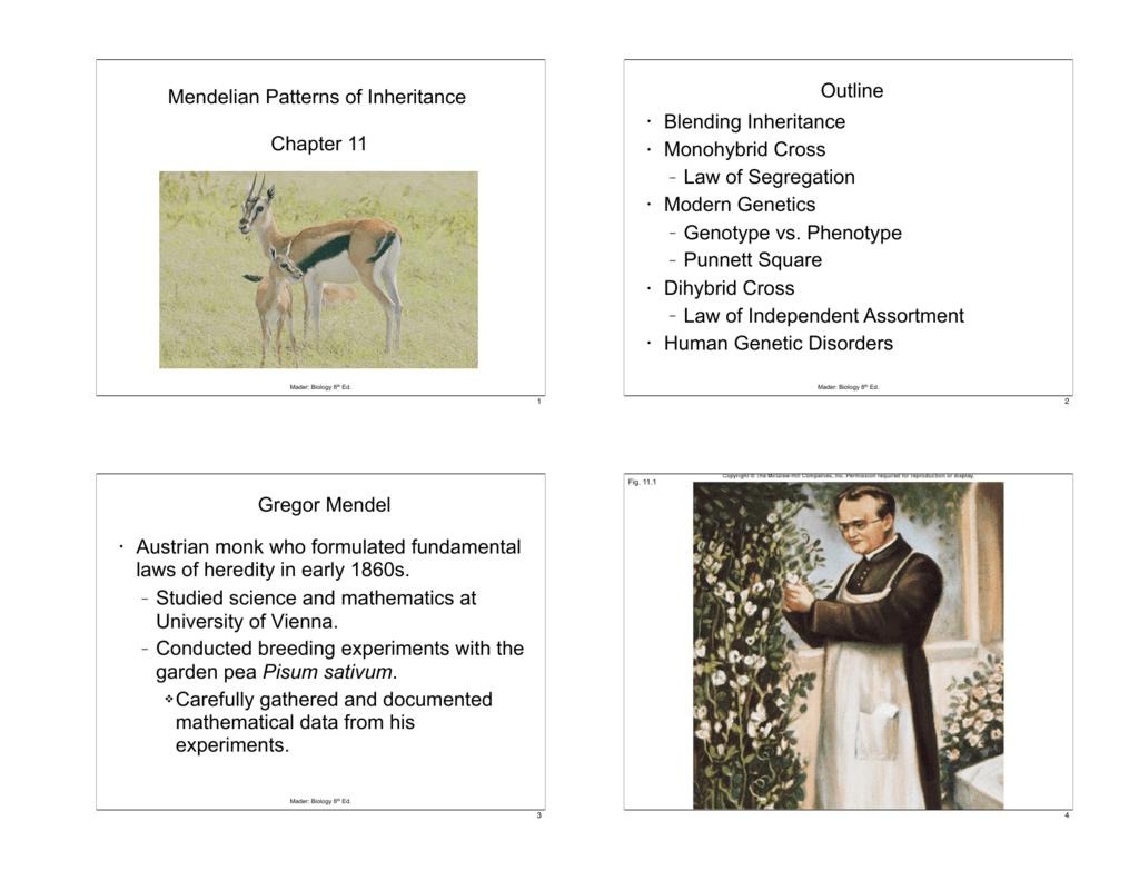 Mendelian Patterns Of Inheritance Chapter 11 Outline Blending