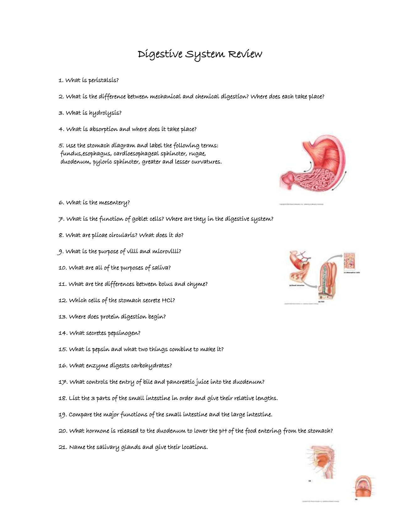 Digestive System Review