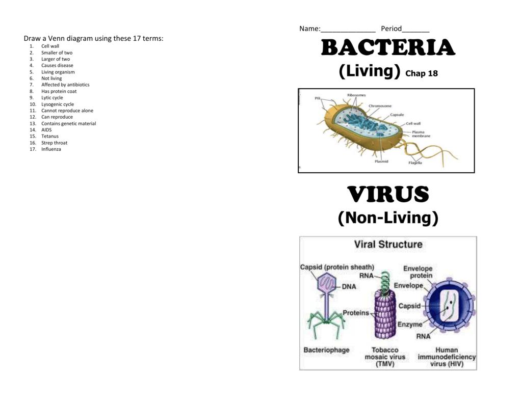Cells Vs Viruses Venn Diagram Answers