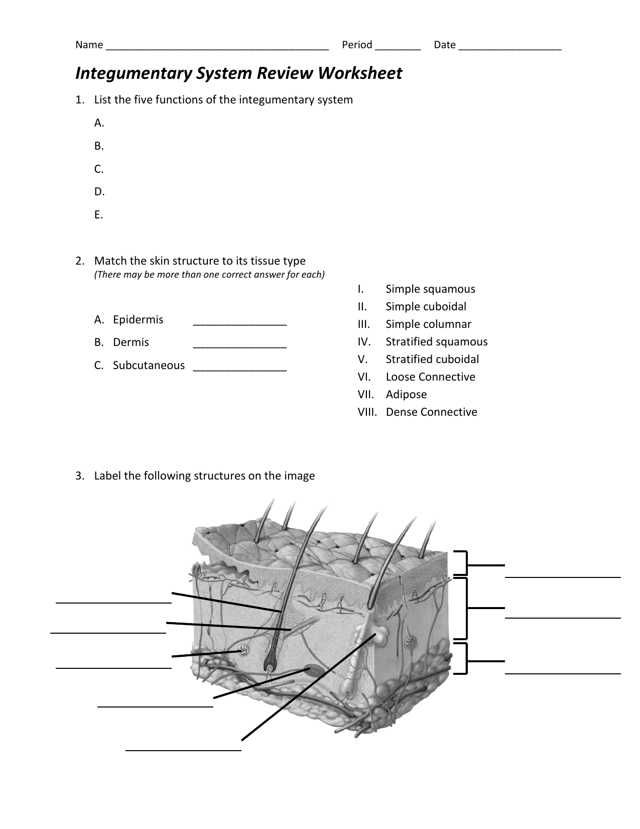 Worksheet Integumentary System Worksheets Worksheet Fun