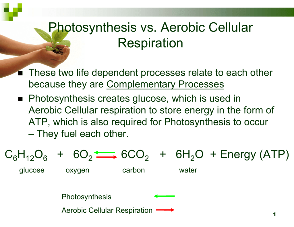 Photosynthesis And Aerobic Respiration Photosynthesis And