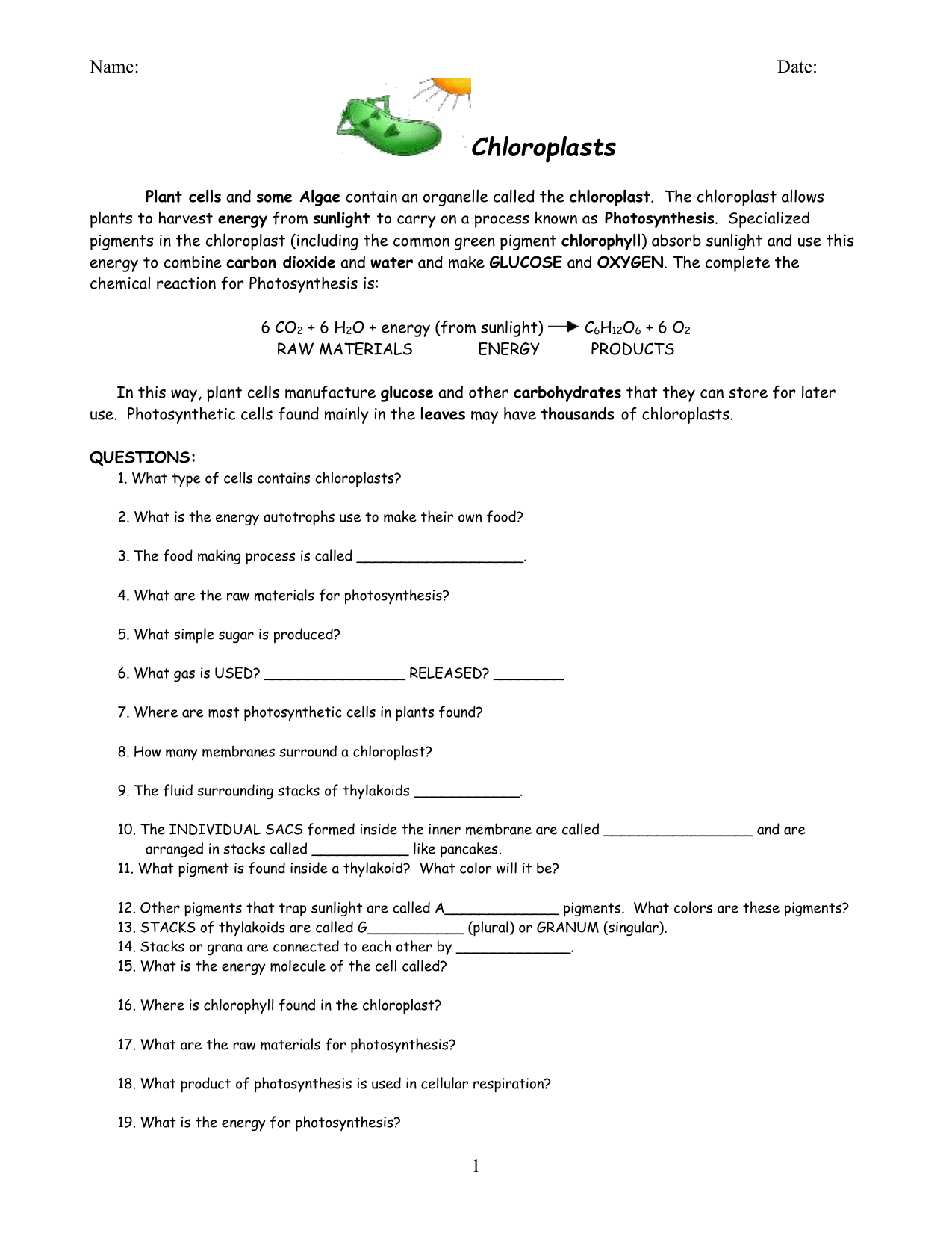 Photosynthesis And Chloroplast Diagram Worksheet Answers