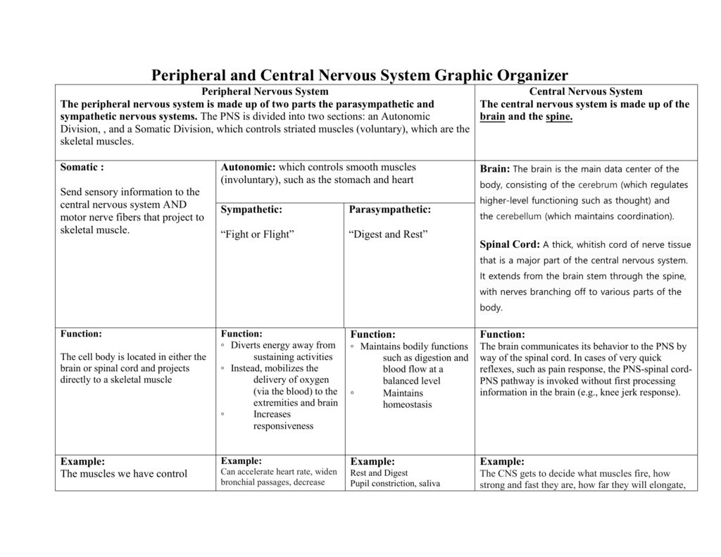Peripheral And Central Nervous System Graphic Organizer