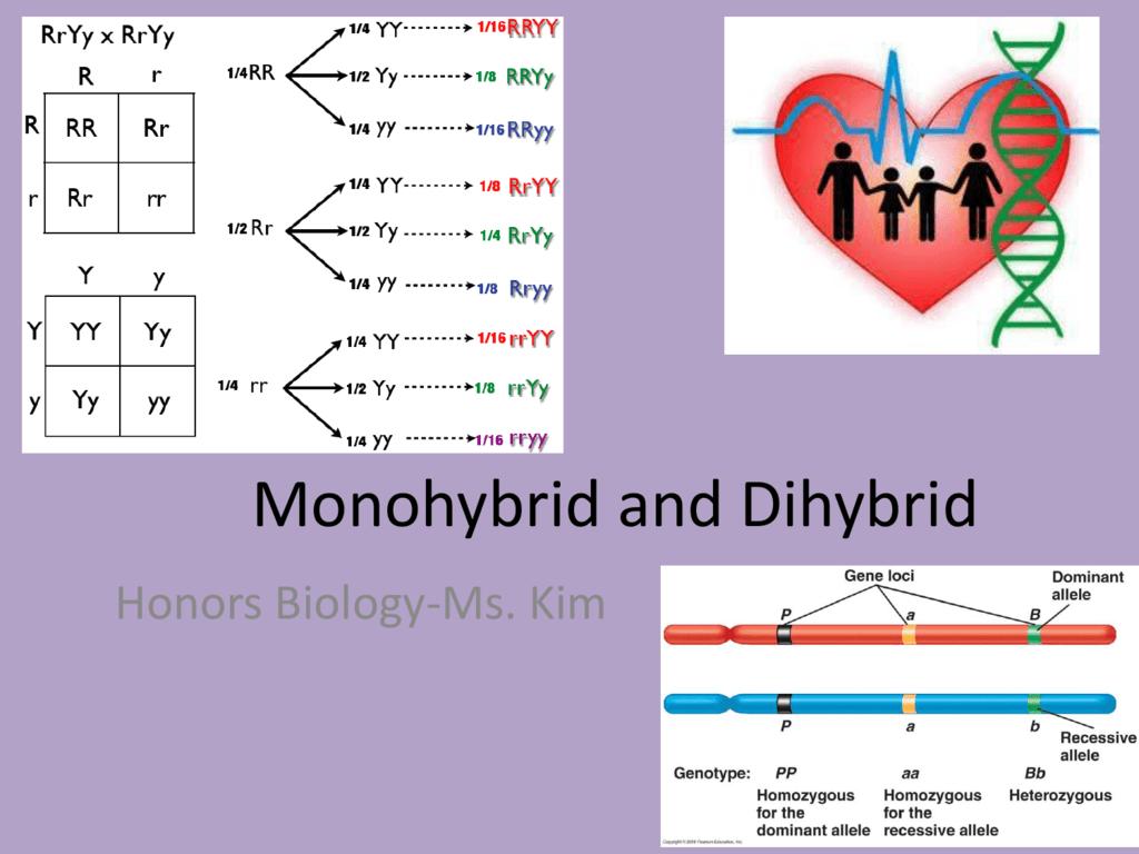 Monohybrid And Dihybrid