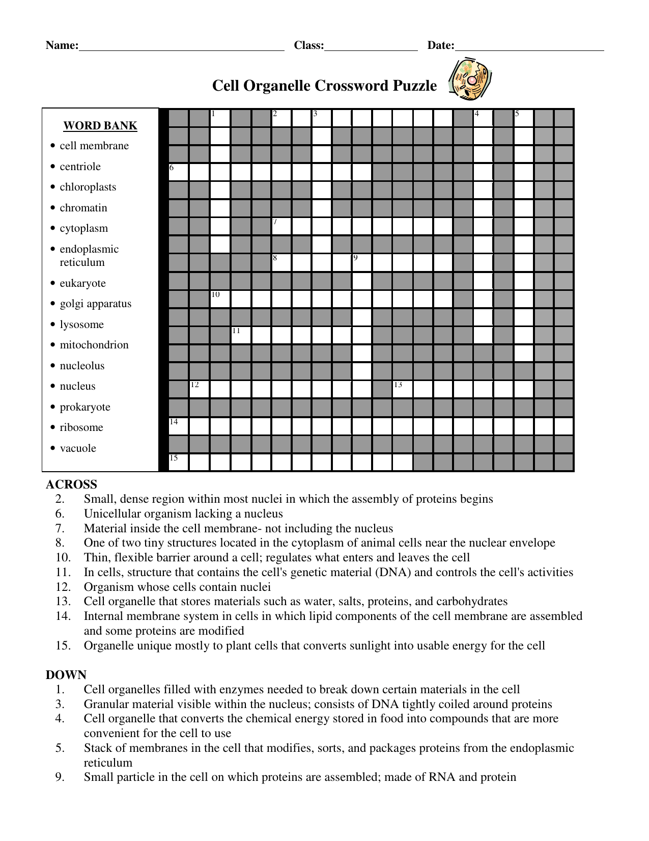 Cell Organelle Crossword Puzzle