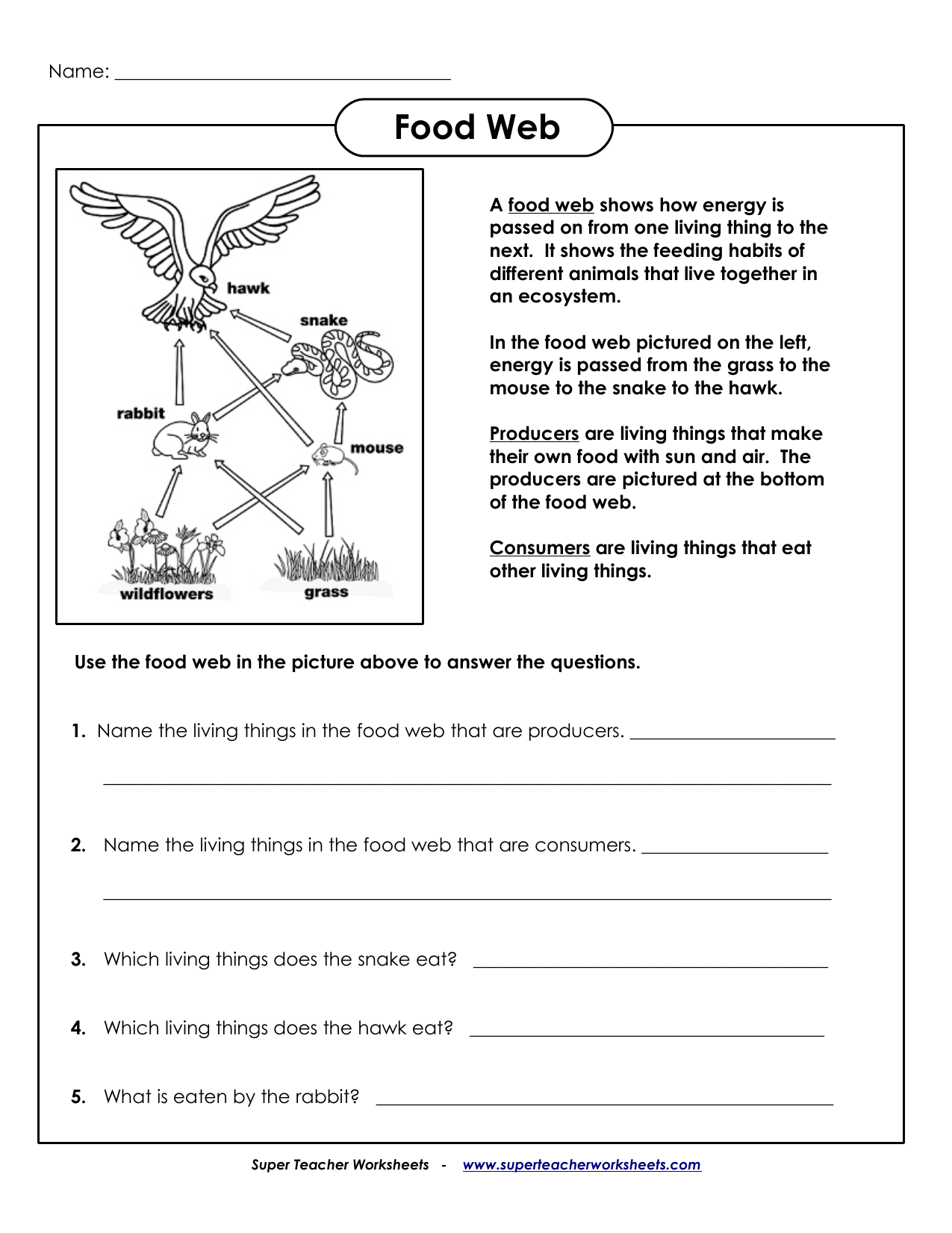 Bio Food Web Worksheet