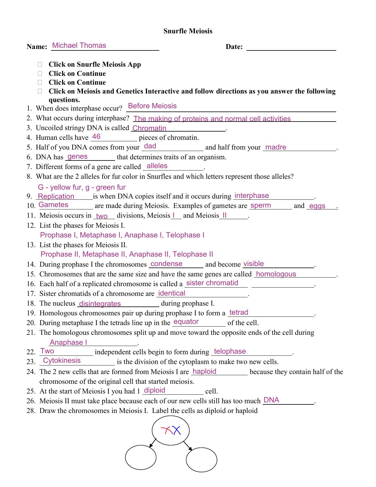 Snurfle Meiosis Worksheet