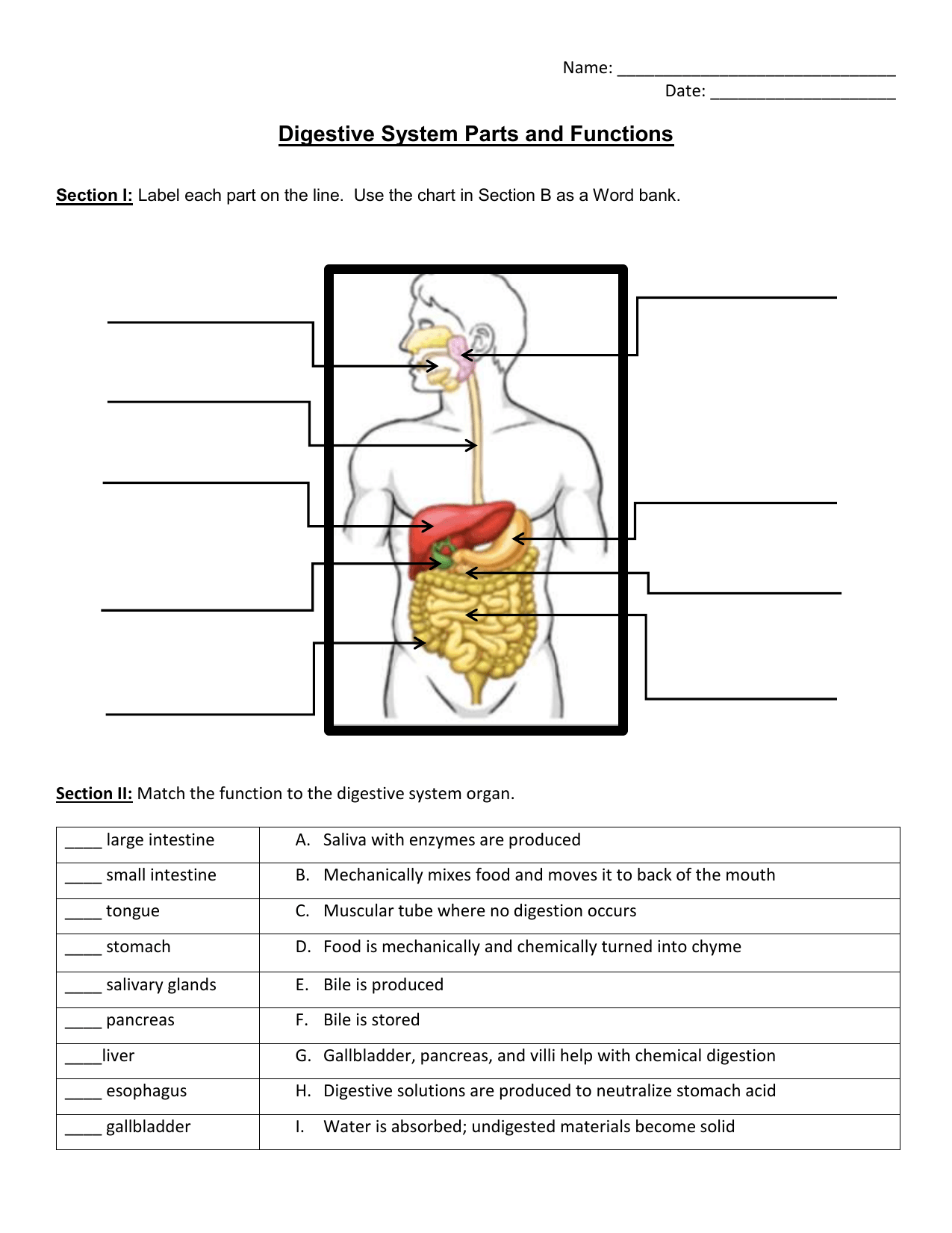 34 Label The Digestive System Worksheet Answers