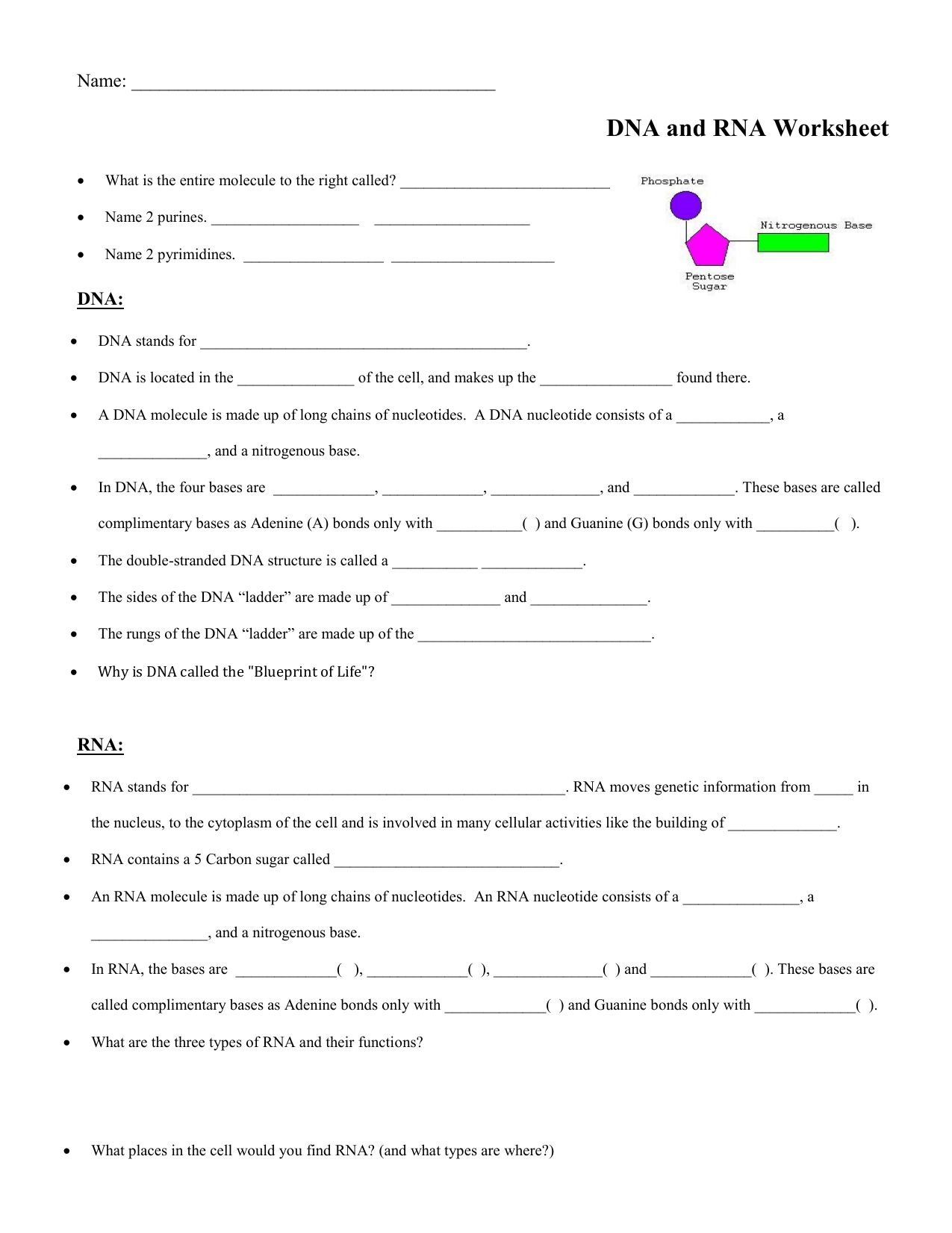 Dna Vs Rna Worksheet