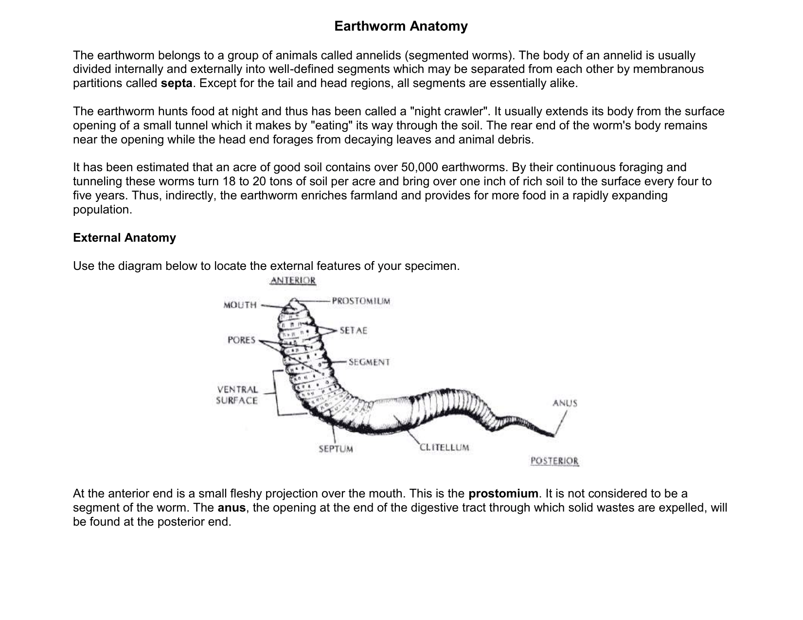 Earthworm Dissection Clitellum