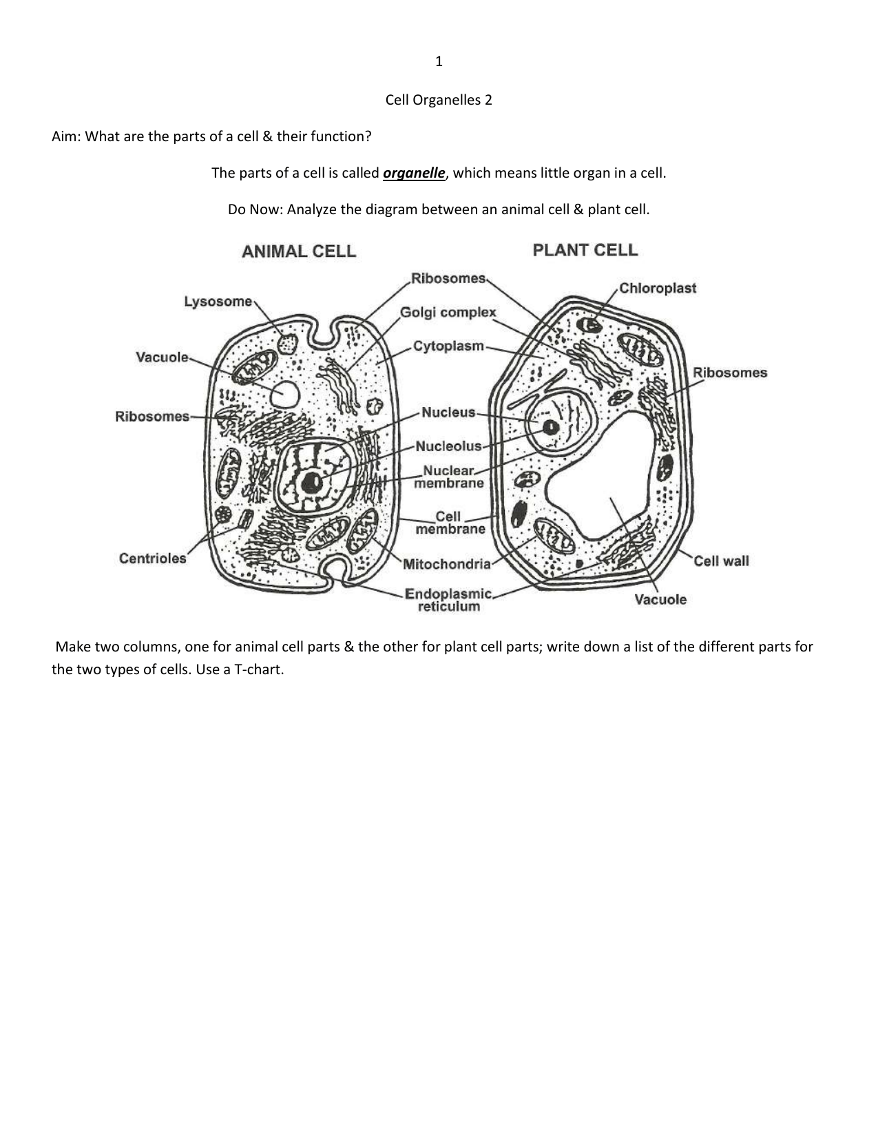 Cell Organelles 2
