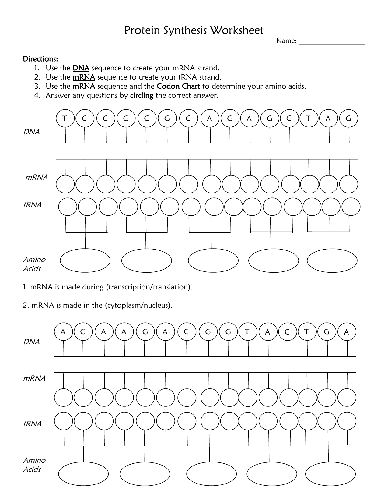 Visual Protein Synthesis Worksheet