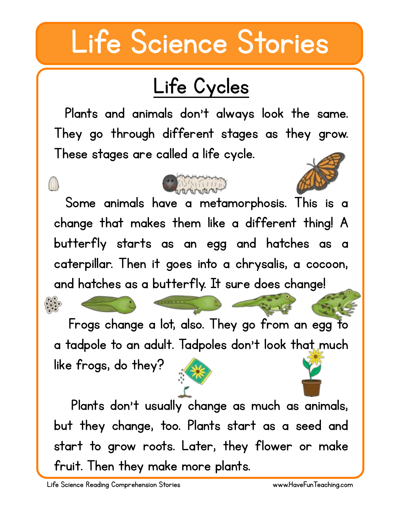 Life Cycles Reading Comprehension Worksheet