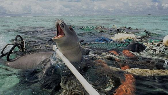 Risultati immagini per pollution animals