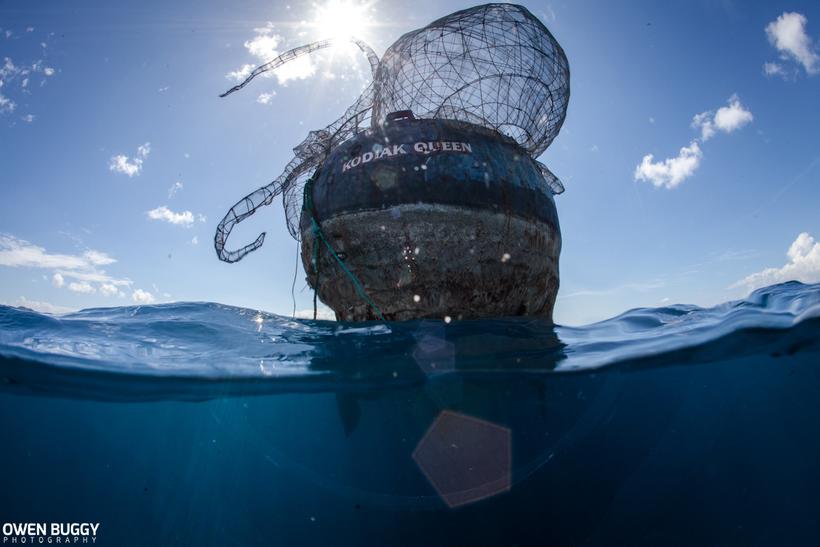 В Карибском море создали самый невероятный искусственный коралловый риф