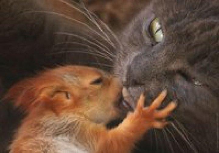 Кошка Пуша стала приемной мамой бельчатам