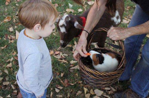 Clan Living, multi-generational living, homesteading