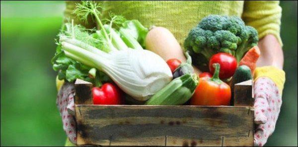 produce-haul-from-year-round-garden