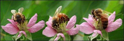 bees-as-homestead-defense