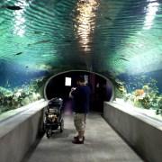 odysea aquarium, scottsdale, az, phoenix, attraction, venue, activities, local