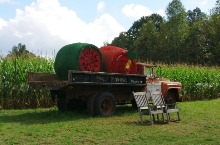 farm, pumpkin, patch, corn maze, wagon ride, bee farm, concessions, fun, diy, animal, fall, autumn, october, local, greenville, sc, stewart farms, food, store, shop, homemade, toddler, tradition, family, venture, holiday, halloween, 2017, parenthood, momblogger, momlife, little conquest