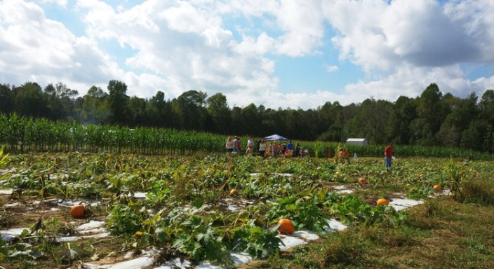farm, pumpkin, patch, corn maze, wagon ride, bee farm, concessions, fun, diy, animal, fall, autumn, october, local, greenville, sc, stewart farms, food, store, shop, homemade, toddler, tradition, family, venture, holiday, halloween, 2017, parenthood, momblogger, momlife