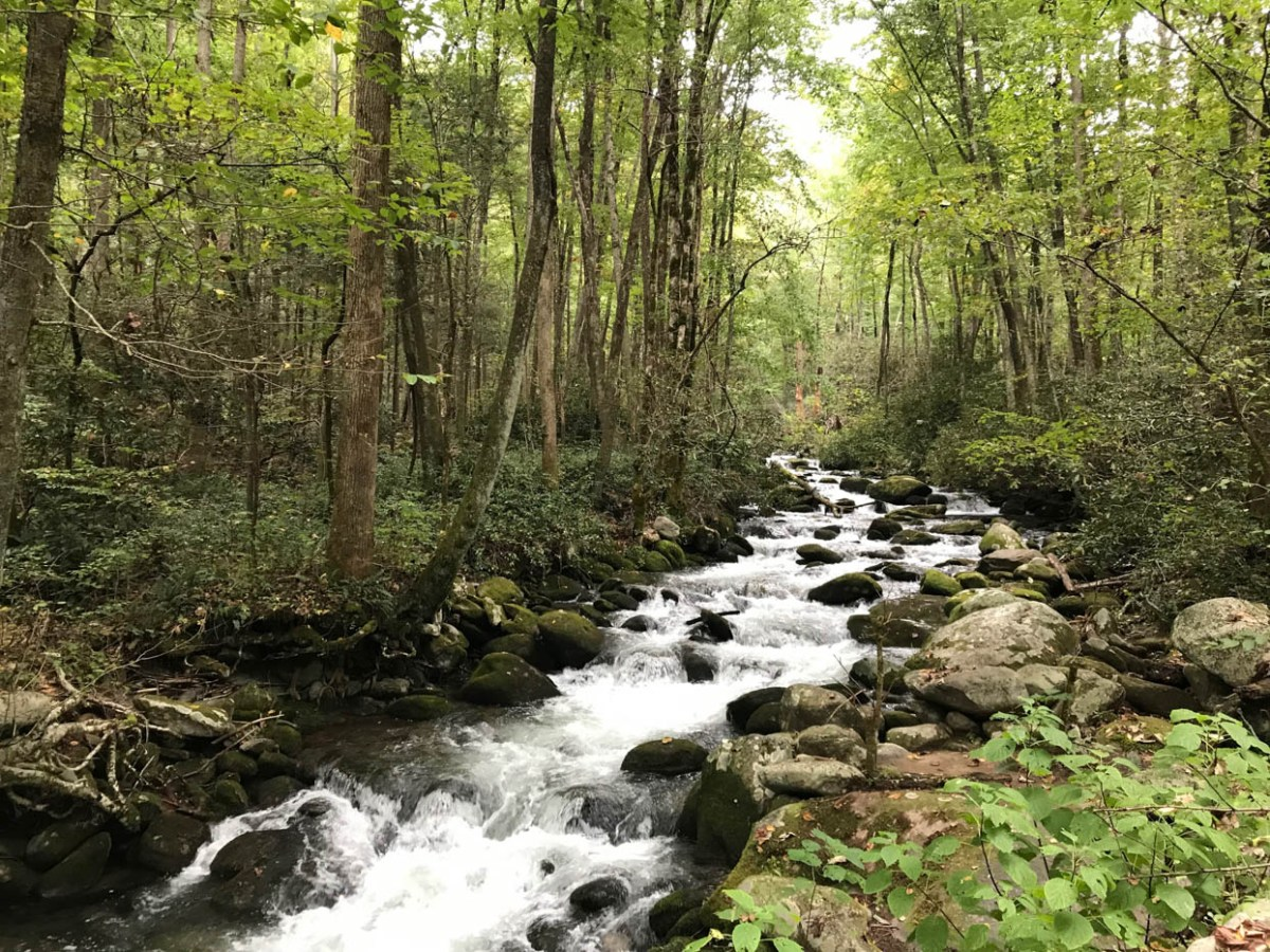 Roaring Fork Motor Nature Trail at Great Smoky Mountains National Park #vezzaniphotography