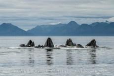 Humpback-Whales-Alaska-1
