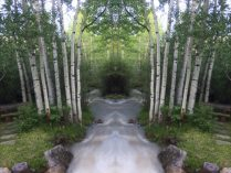 mirrored forest scene: created in Diptic
