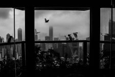 Wild birds fly outside and rest on the window sill of the apartment in Hong Kong where Georgia has been working for Kathryn for 20 years. April 29, 2013