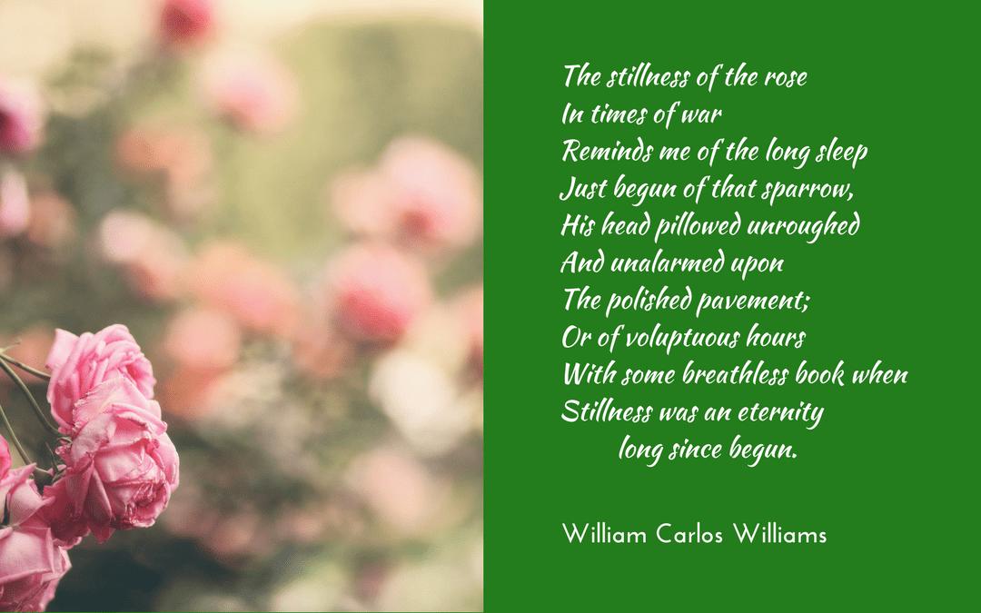 The Rose by William Carlos Williams; photo credit: Alina Sofia, unsplash.com