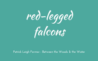 Red-legged falcons