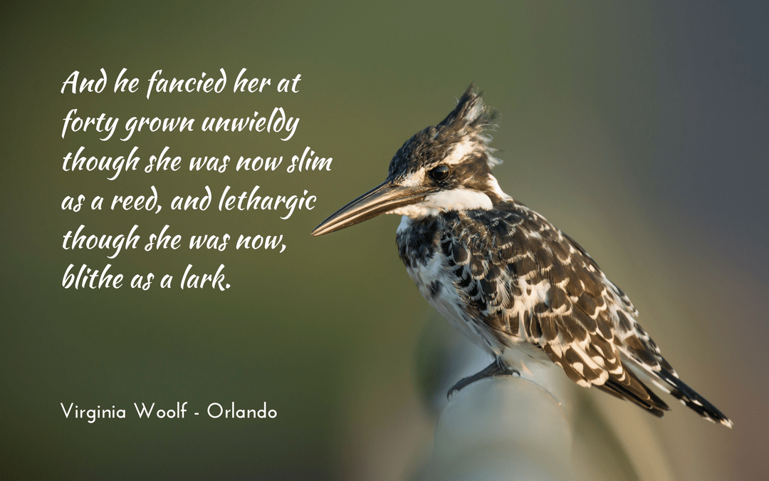 Virginia Woolf - Orlando - Photo credit: Vincent van Zalinge at unsplash.com