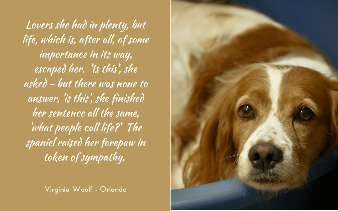 Virginia Woolf - Orlando - quotation