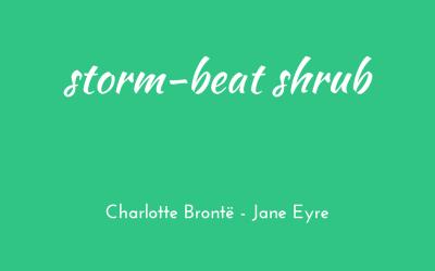 Storm-beat shrub