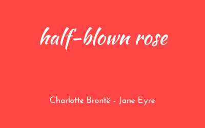 Half-blown rose