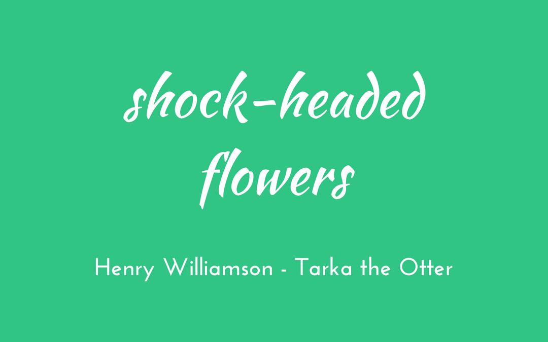Shock-headed flowers