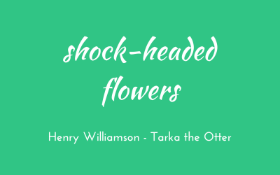 Shock-headed flowers