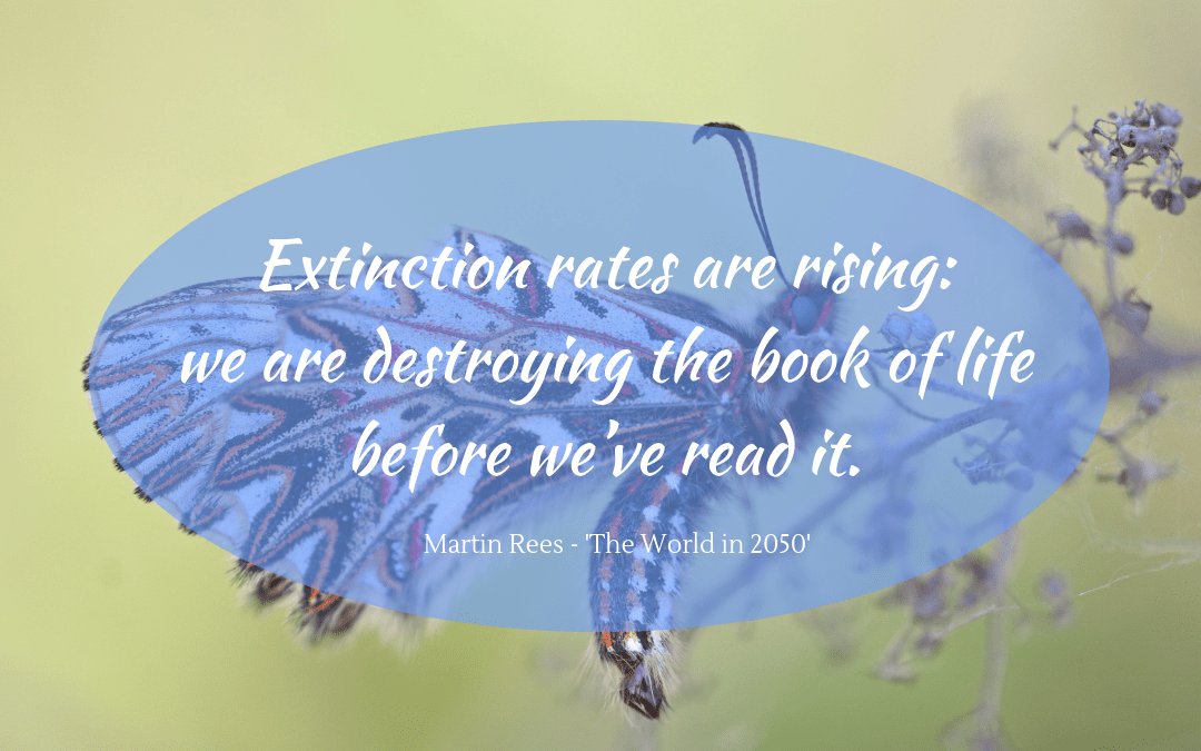 Martin Rees quotation on extinction